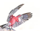 Galah Print of watercolor painting G00415- 5 by 7 print wall art print - bird art print