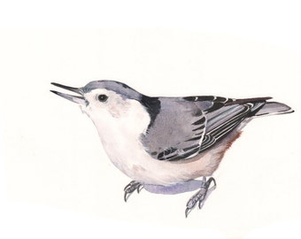 Nuthatch PRINT of watercolor painting A4 print wall art print - bird art - art print - N6615 - wildlife print