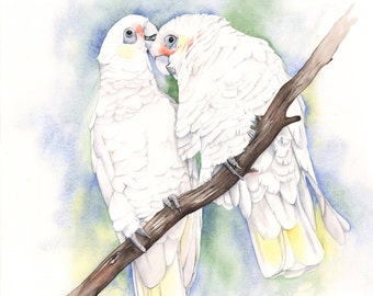 Corellas print of watercolor painting C0815 - 5 by 7 size print