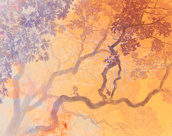 Coral Branches Fine Art Print or Greeting Card