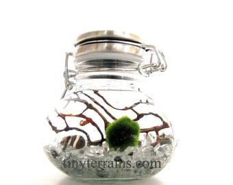 Marimo Moss Ball Small Wide Stainless Steel Jar Aquarium / Terrarium: 15 colors available