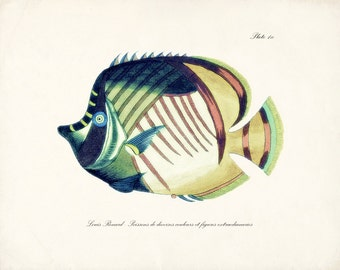 Vintage Fanciful Fish Natural History Art Print - Plate ix