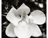 Sex and Death, Magnolia Grandiflora #2929 June, 2014