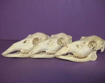 1 Real doe deer skull animal bone teeth head buck craft good man cave home decor hand made taxidermy part piece
