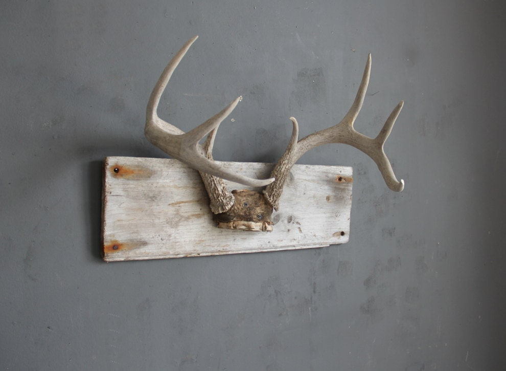 Large Deer Antlers Mounted On Driftwood Hat Rack