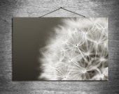 Dandy - multiple sizes fine art photo - black white gray spring dandelion - free U.S. shipping