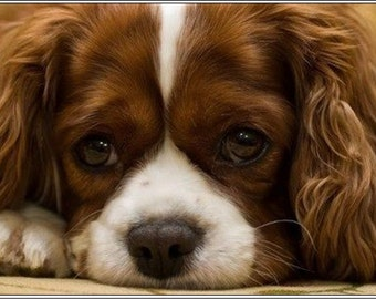 Pack of 4 Dog Puppy Cavalier King Charles Spaniel dogs puppies Greeting Notecards/ Envelopes Set