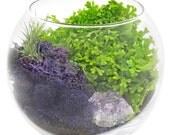 crystal terrarium, terranium, zen crystal, amethyst, air plant, moss, perfect gift for her, hostess gift, terrarium, birthday gift,
