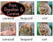 PDF Wild Cats 3-Part Cards in Print, Cursive and D'nealian Fonts - Montessori Begining Reader - Nomenclature Cards