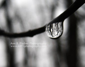 Forest Reflection in Raindrop Photo, Black and White Canvas Gallery Wrap, Miksang Photography, Fine Art Photography, Nature, Water