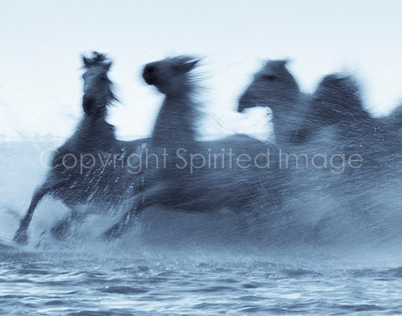 Equine Photography - HORSES of the CAMARGUE - TURN - Edition Print, Ghost horses.