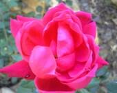 "Bohemian Lace (Patchouli & Rose) Incense Sticks 11"" 30 Sticks"