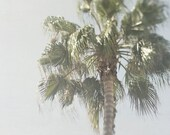 Palm Tree Photograph, Summer Picture, California Artwork, Gray and Green Wall Decor, Tropical Photography, Vacation Home Art