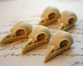 5 Bird Raven Crow Skull Cabs Resin Cabochon Taxidermy Animal Steampunk Gothic Goth Skull Ivory 35x16mm 5 PIECES