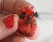 Anatomical heart pin/brooch