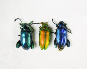 "3pack 1"" Real jewel beetles Sagra Festiva orange red green iridescent dried preserved insect bug taxidermy"