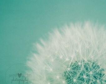dandelion photography print, nature photography, stillife photography, whimsical art, wall art, home decor, nursery decor, nature art, aqua