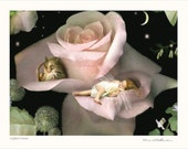 Fine Art  Print ..Flower fairy  'A Quiet Corner'  unmatted - print only - signed and titled By Charlotte Bird