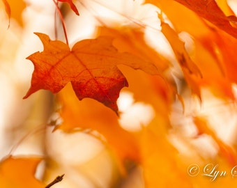 Fall Leaves -  Nature, landscape photography, fall, autumn, abstract, fine art, leaves, art, rustic decor, home decor, new england