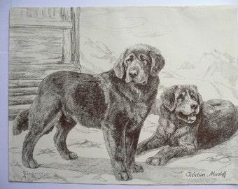 TIBETAN MASTIFF dog print Vintage 1935 N S Langley bookplate Unique collectors gift birthday anniversary dog lover present Mastiff dog