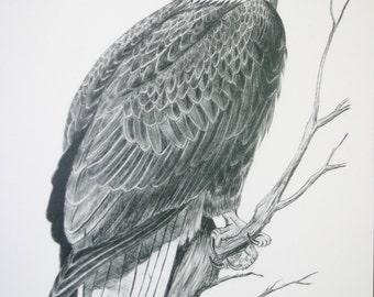Signed Wildlife Print - American Bald Eagle