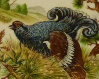 Vintage Game Foul Bird Plate by Bareuther Waldsassen  Bavaria Germany