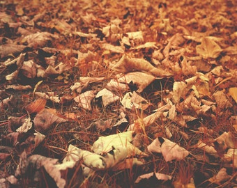 Fine Art Photography Digital Download Leaf Fall Brown Red Gold Woodland Autumn Leaves Printable Art Photo