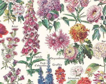 Vintage French 1920s Print Old Cottage Garden Flowers Botanical Book Plate