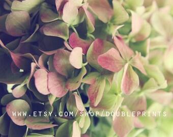 Fine Art Photograph, Flower Photograph, Green Hydrangea Photography