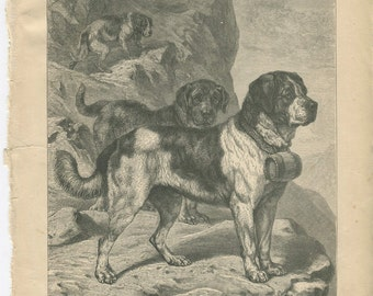 Vero Shaw - Antique Dog Print - Original lithograph  - 1881 Book Of The Dog - St Bernard