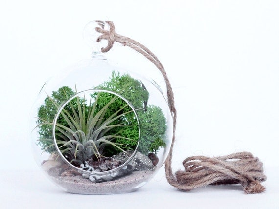 Small Geode and Pyrite Air Plant Terrarium Kit with Green Moss