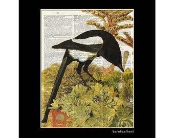 Magpie Bird -  Dictionary Art Print - Home Decor - Book Page Art print No. P363