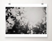leaf photograph tree photograph black and white photography summer photograph leaf print nature photography tree print