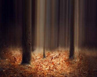 Fall Tree Photography - Square Art Print - Home Decor - Modern