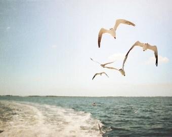 Sea Birds Photography - ocean Photography - Bay - Beach Decor - Nautical Decor