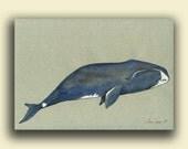 "ORIGINAL- Bowhead blue whale - original artwork watercolor painting - marine mammal - nautical decor ocean - 11x8"" - by Juan Bosco"
