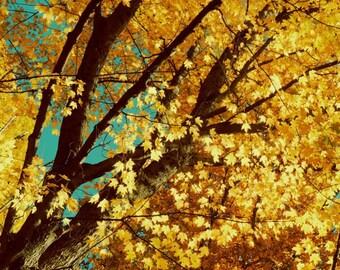 Golden Autumn Photograph -  Nature Tree Art - Wall Decor - Foliage - Fall - New York Tree Art - Golden Tree - Nature Photograph