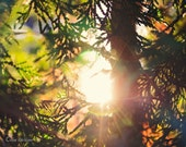 Nature photography,nature, fall, autumn, breakthrough sun,  fall colors, cedar hedge, trees, country, rustic, yellow, orange