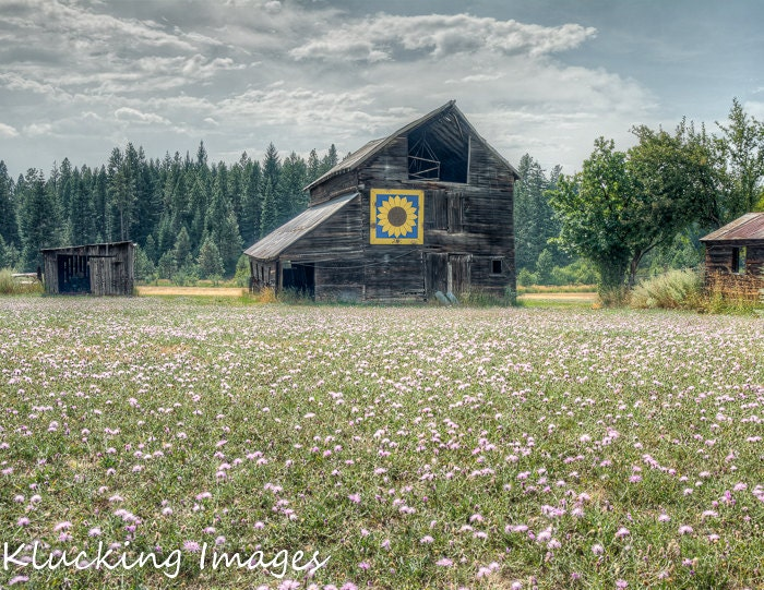 Sunflower Barn Quilt Ronald Wa Barn Washington By