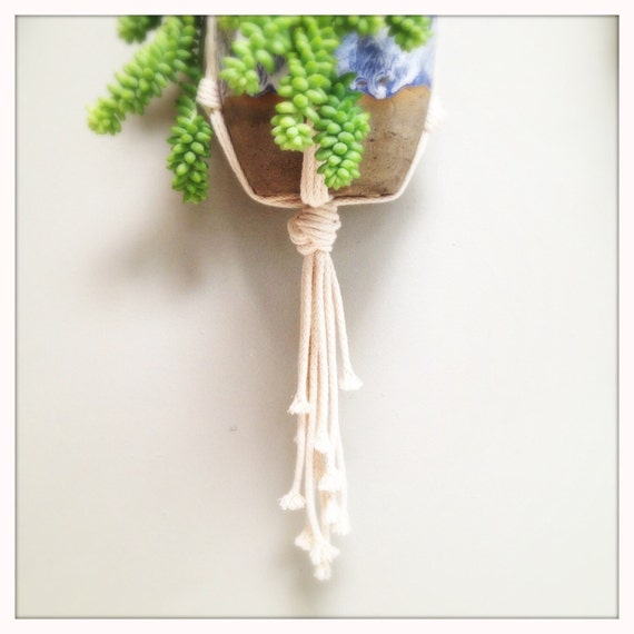 hispanic singles in cotton plant Beautiful dried cotton stalks that are preserved for you enjoyment put some in your arrangements to please any eye use them by themselves or with other dried plants and flower to make your.
