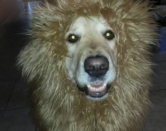 Lion Mane Dog Costume