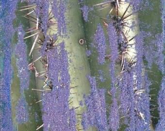 Untitled (Glitter Cactus)