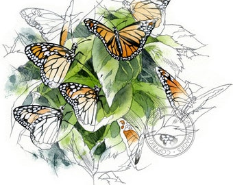 Monarch butterflies watercolour - wildlife art - nature print of original artwork