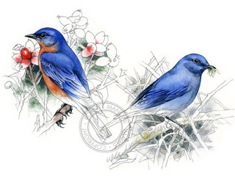 Bluebirds watercolour - bird art, wildlife art - nature print of original artwork