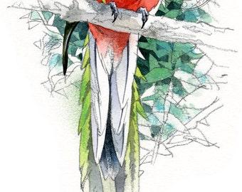 Quetzel - bird wildlife art - nature print of original artwork
