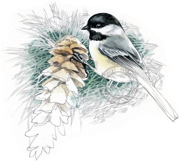 Black-capped Chickadee watercolour - bird art, wildlife art - nature print of original artwork