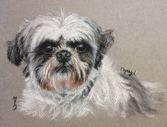 Shitzu Shihtzu Custom Pet Portrait Charcoal Drawing From
