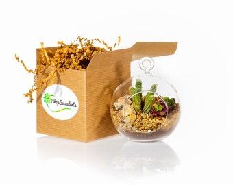 Mini Globe Succulent Terrarium Kit: Peanut Cactus (MG-1004)