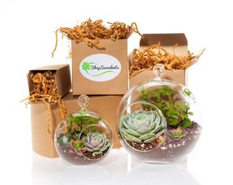 Shop Succulents Modern Succulent Terrarium Globe Duo