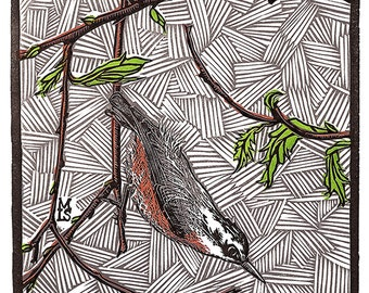 Hungry Nuthatch - limited edition letterpress linoleum print